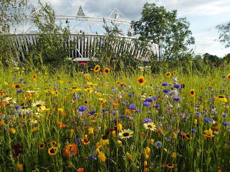 Bluedale Plants Online Blog Purchase Native Grasses